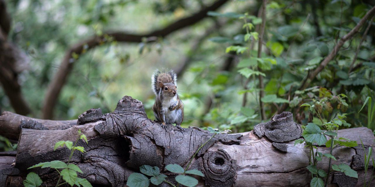 Guardate! Uno scoiattolo a New York