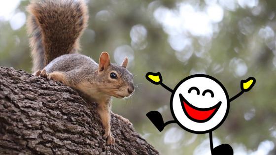 Il mio selfie con scoiattolo